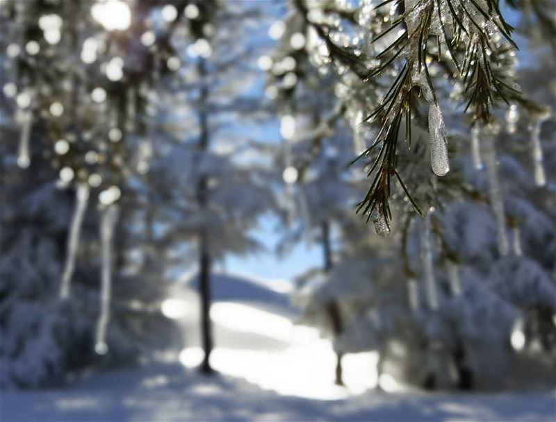 Ice, ice, baby ice freezing cold ice cedars cedarsofgod ...