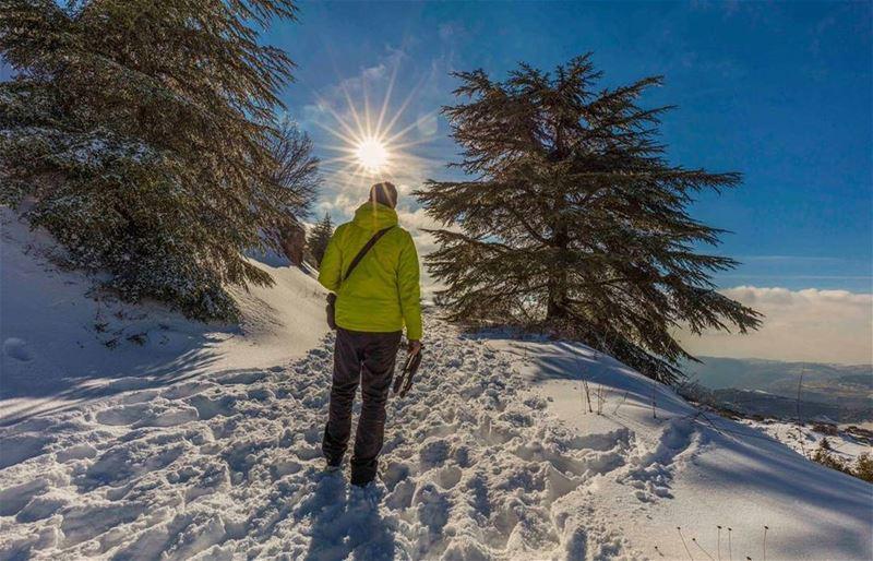photographer hiking shouf cedars lebanon sun day light snow ... (Al Shouf Cedar Nature Reserve)