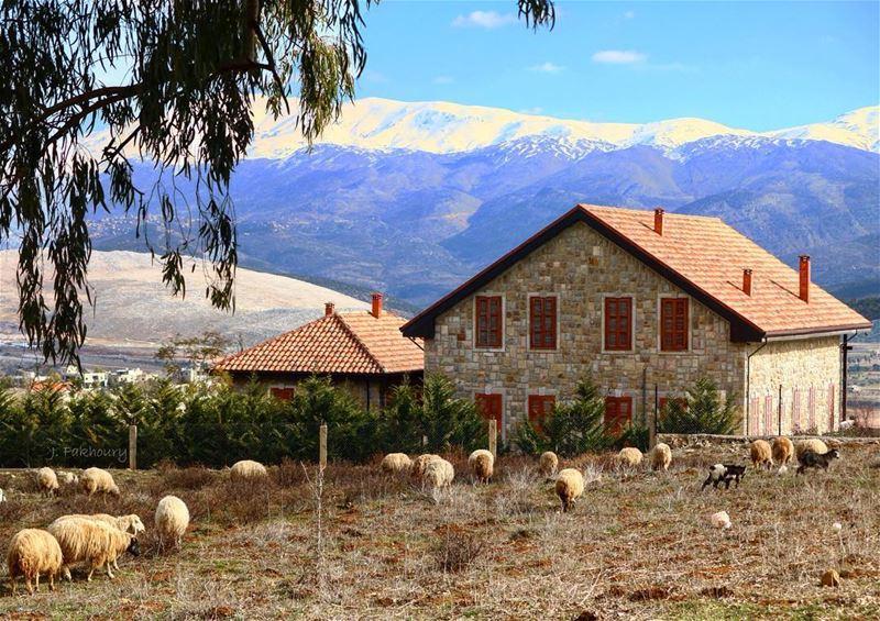 The simple life 🐏 @livelovemarjeyoun (Marjayoûn, Al Janub, Lebanon)