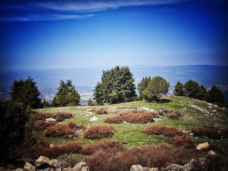 @dibjessLebanon ♥ tb trees sky blueskies green forest mountains ... (Kammou3a)
