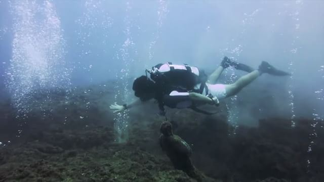 Rolling the deep... sketch from my diving video shot in beirut lebanon...