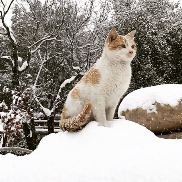 cat mesmerized by falling snowflakes.Who says cats are lazy and love... (Al-Qoubaiyat)
