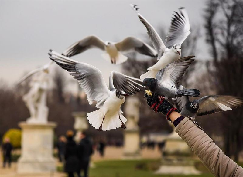 Message of peace!... shot in paris france lebanonspotligths seagull ...