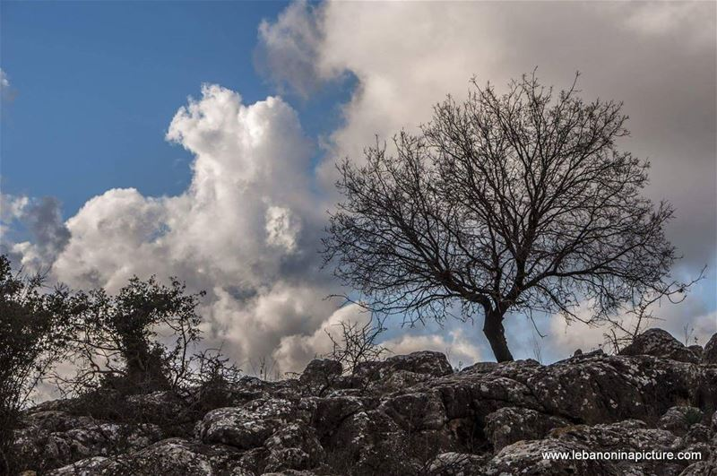 A lonely tree waiting for spring to come... lebanoninapicture ... (Yaroun - South Lebanon)