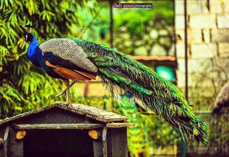 photo fadiaounphotography animals lebanon photoshooting photoinsta ...