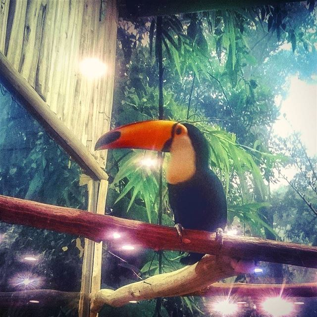 Tucano bird at pet zone- kuwait🐦🇵🇸 petzonekuwait pets pets🐾 birds ...