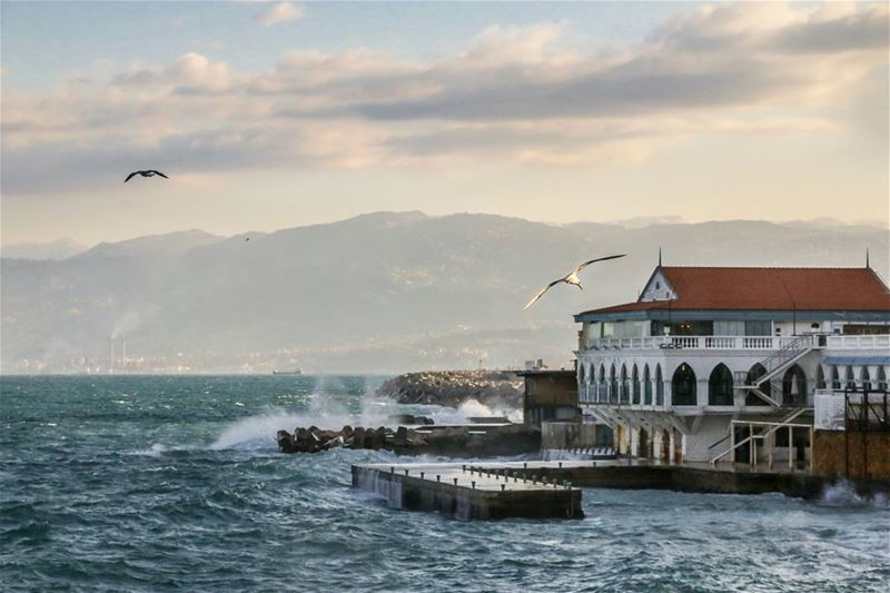 A morning with gulls in Beirut.. gull today lebanon beirut lebanese ...