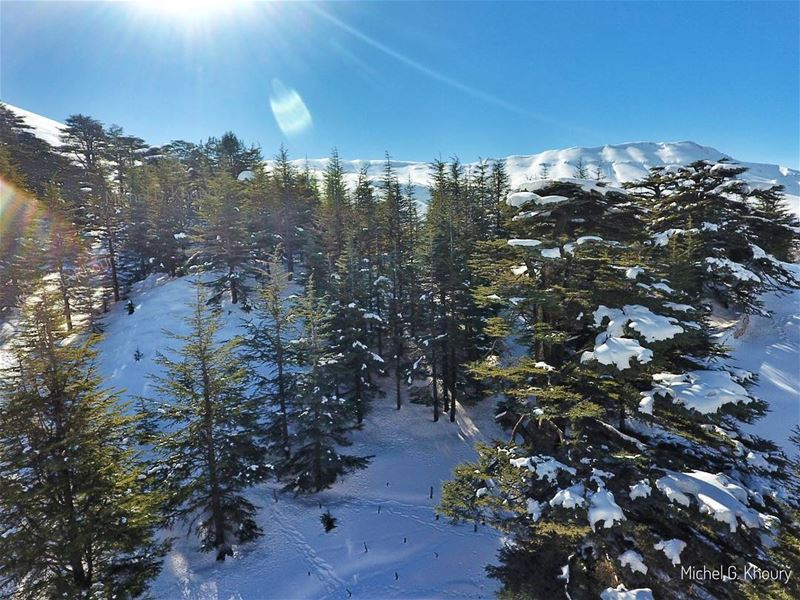 Morning from our lovely Cedars of GOD... AboveLebanon Lebanon ... (Cedars of God)