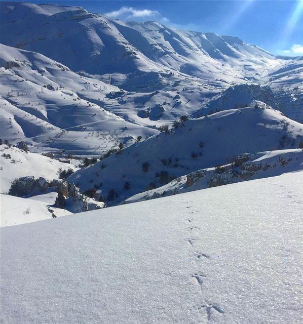 في_بلادي للحجال ممرات لا تعيقها الثلوج، من اعالي تنورين lebanon ... (Tannourine Cedars Nature Reserve)
