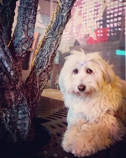 innocent dog posing vedette animal animallovers night walk igers ... (Beirut, Lebanon)