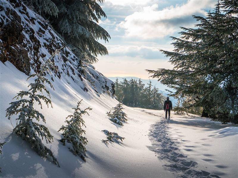 Momma cedars and their babies lebanon letsgosomewhere ... (Barouk Cedar Forest)