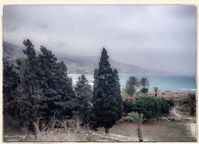 Ancestor's land swept by the winds landscape landscape_lovers trees ... (Byblos, Lebanon)