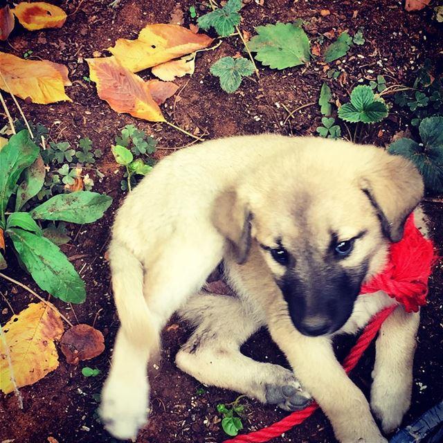 having a dog is like having a 1000 friend canon7d dogs best friends ...