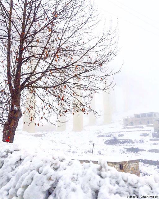 Snow provokes responses that reach right back to childhood ⛄️ december ... (Dahr El Baydar)