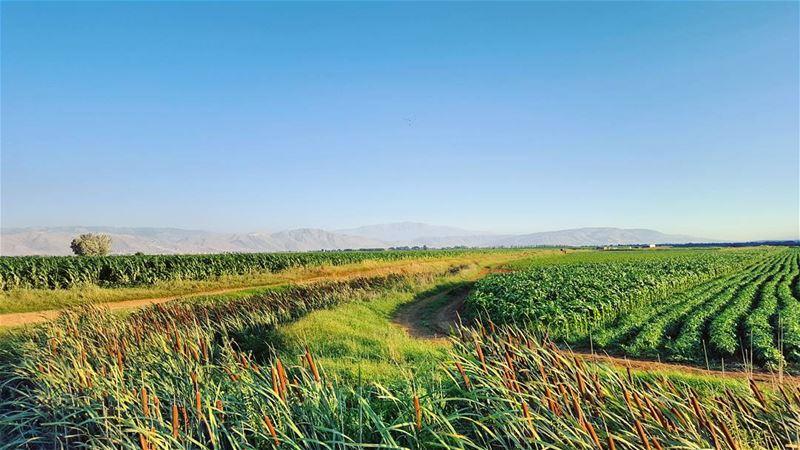 بتخلص الدني... وما في غيرك يا وطني 🇱🇧 LiveLoveBekaa ... (Bekaa Valley)