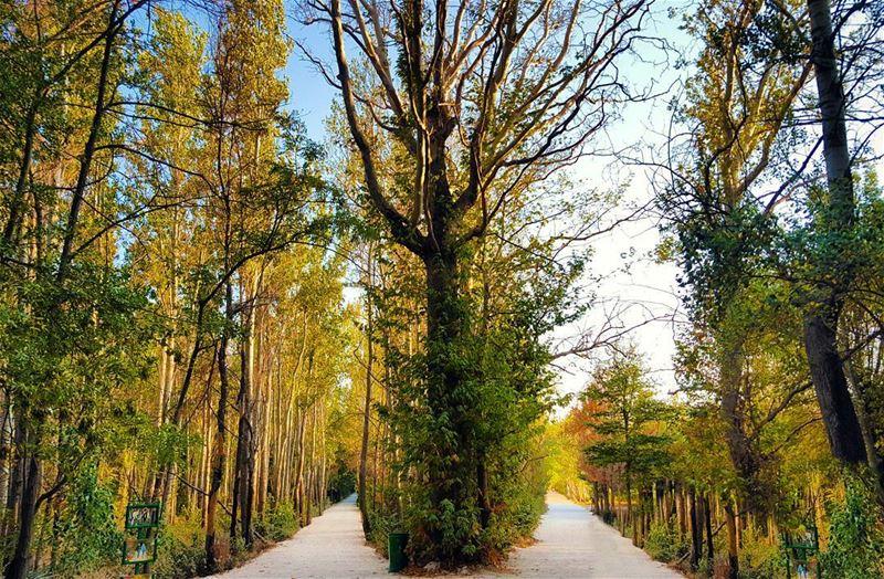 Two roads diverged in a wood... ... (Deïr Taanâyel, Béqaa, Lebanon)