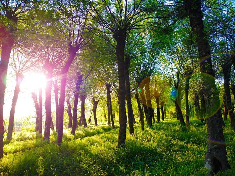 I'm walking on Sunshine... (Deïr Taanâyel, Béqaa, Lebanon)