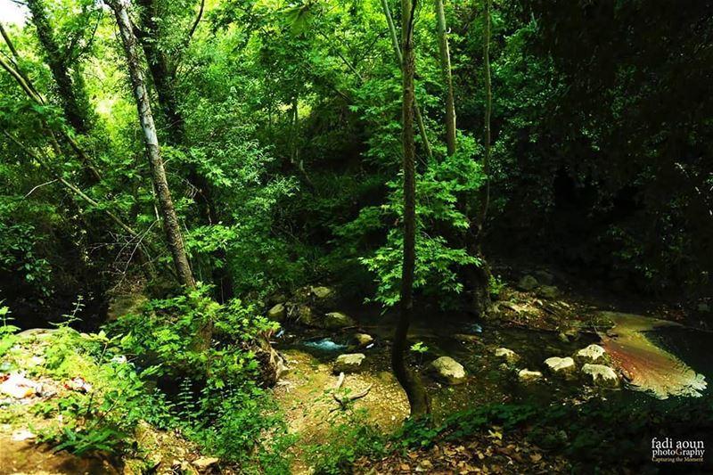photo fadiaounphotography lebanon nature green water trees ...