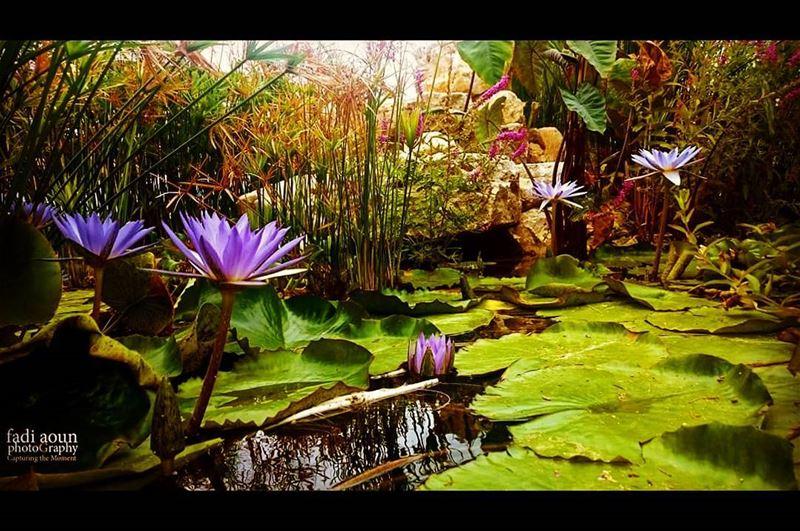 photo fadiaounphotography nature beauty lebanon photoinsta ...