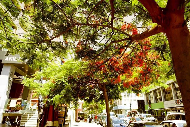 photo  fadiaounphotography  tree  lebanon  nature  hamra  photoinsta ...
