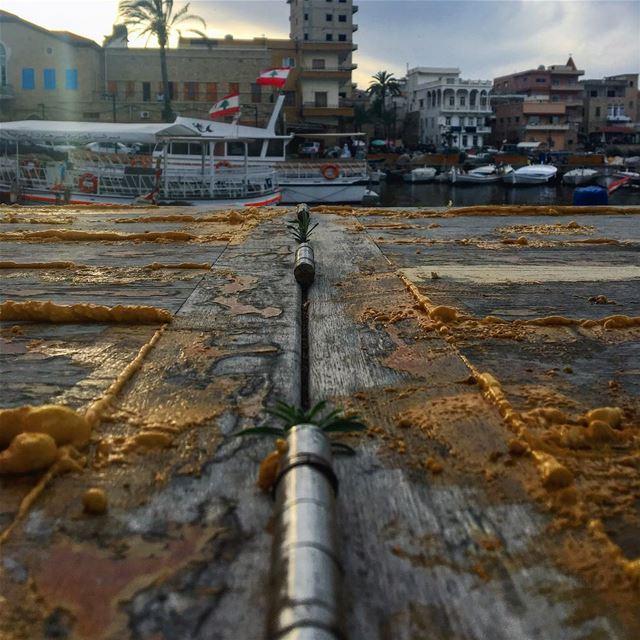 قولك في أمل؟؟🌱 life light lebanon lebanon_hdr lebanonmania ... (Tyre Fishermen Port.)