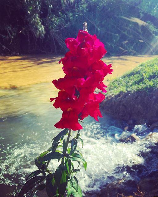 🌷 light water naturephotography photography photooftheday ... (نهر القاسمية)