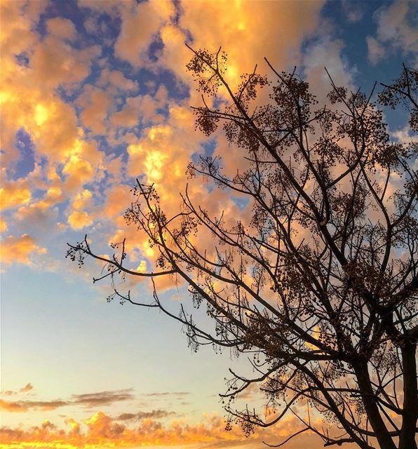 🌤 redskies nature naked_trees orange clouds art lebanon ... (مدينة صور)