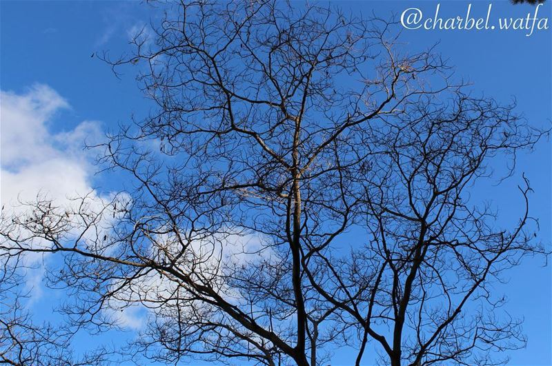 In love with nature tree winter sky clouds noleaves freedom ...