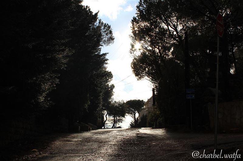 The beauty of darkness light shadow trees street path destiny ...