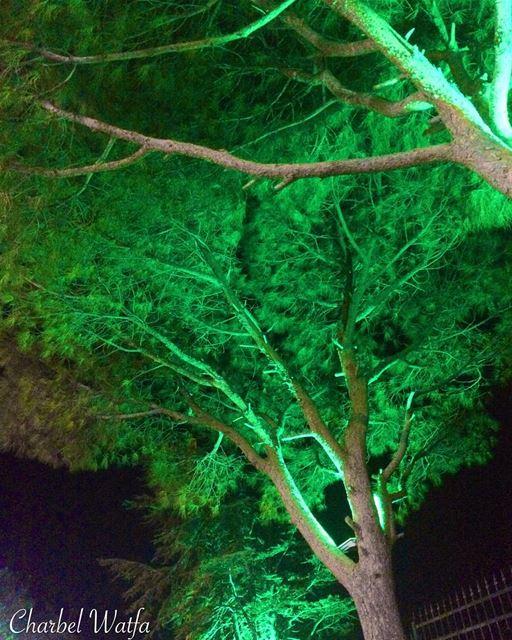 Pine tree of Lebanon wild mountain forest local Lebanese ... (Assia, Liban-Nord, Lebanon)