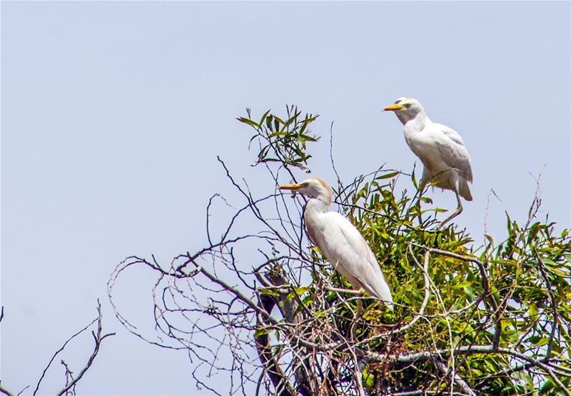 Birds Pitstop