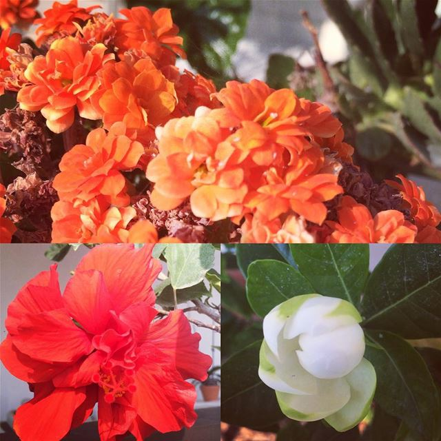 Flower collection at mom's balcony multicolor summertime lovenature... (Jbeil Blat)