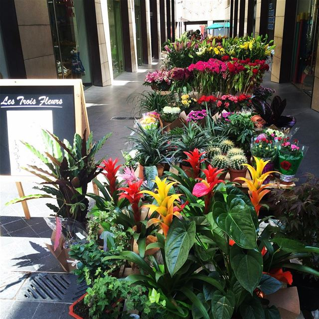 Flower market at Beirut souks Lebanon joy colors summer happiness...