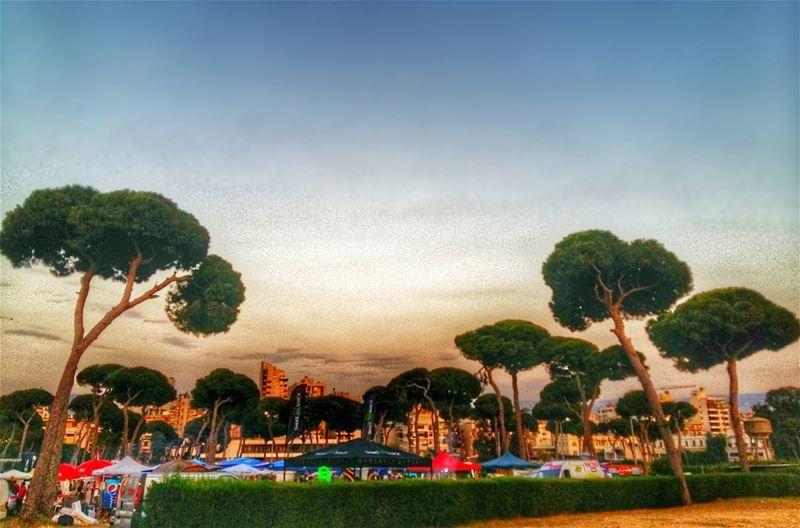 hippodrome beirut lebanon city trees pine nature park citypicnic ... (Beirut Hippodrome)