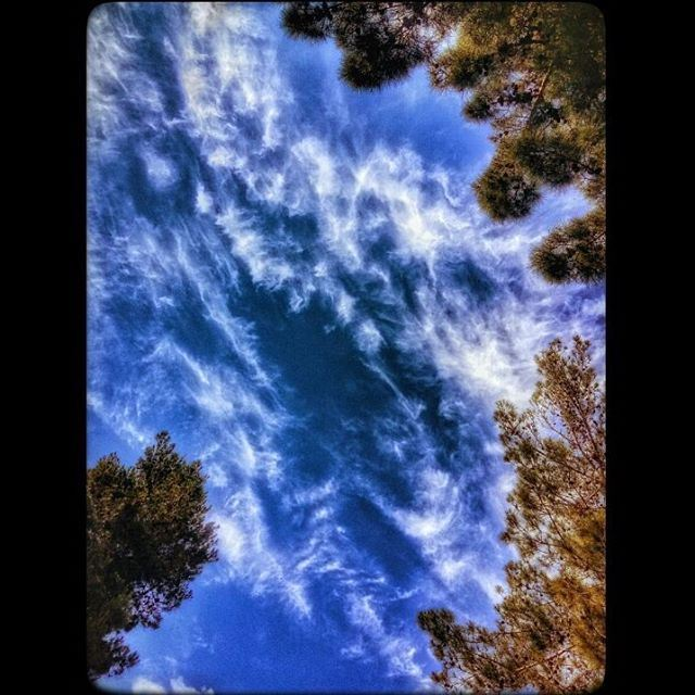 clouds cloudy bluesky trees nature art upwardshot baakline ... (Baakline, Mont-Liban, Lebanon)