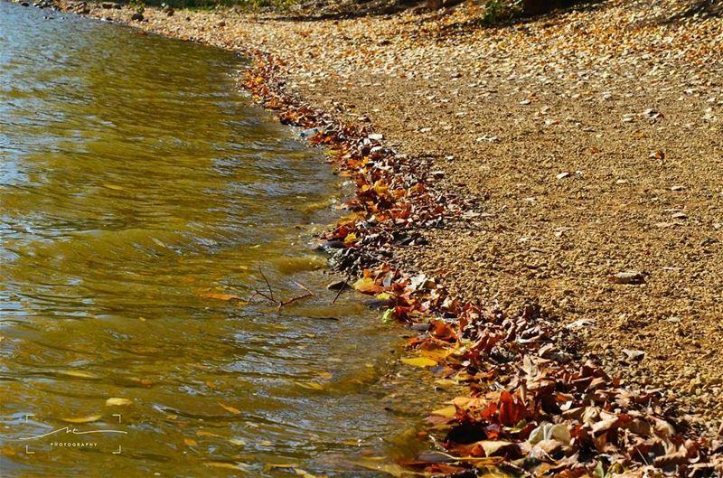 Fall falling... (Deïr Taanâyel, Béqaa, Lebanon)