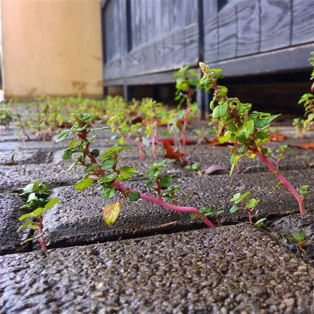 Have the will to overcome the toughest obstacles. plants  determination ...
