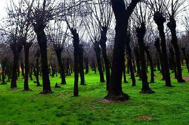 tb winter green trees taanayel lebanon photographylovers ...