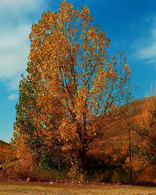 photography nature_perfection season autumn yellow orange ...