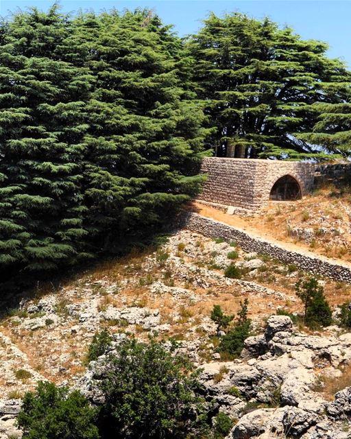 Antiga igreja aninhada no bosque de cedros em Jaj, Monte Líbano 🇱🇧... (Jaj, Mont-Liban, Lebanon)