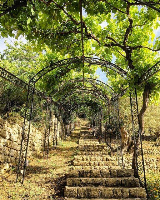 Começando a semana com essa bela foto de um típico jardim mediterrâneo... (Bouyouti)