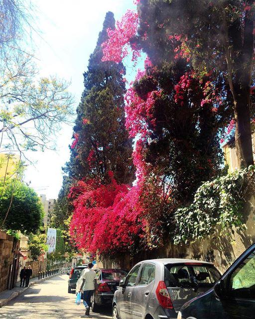 Caminhada matinal na agradável e arborizada Rue Huvelin, fotografada por... (Rue Huvelin)