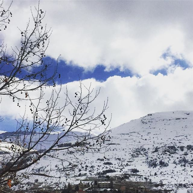nature winter cold weather white clouds blue sky naked trees ... (Faraya, Mont-Liban, Lebanon)