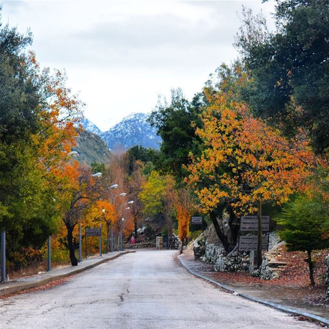 Colorful Morning 🍁🍃 (Annaya - Saint Charbel.)