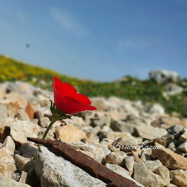 Spring in Yaroun