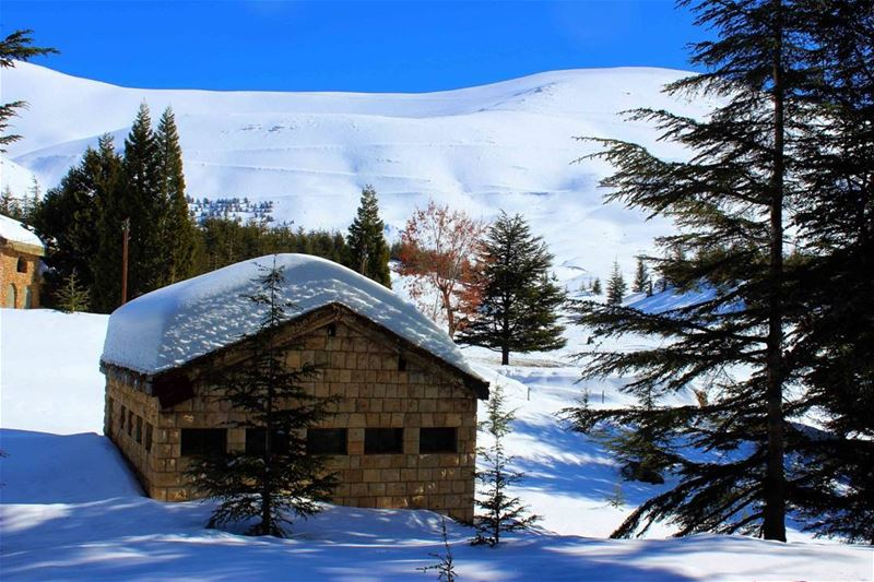 الارز - لبنان Lebanon instaleb livelovelebanon winter snow ...