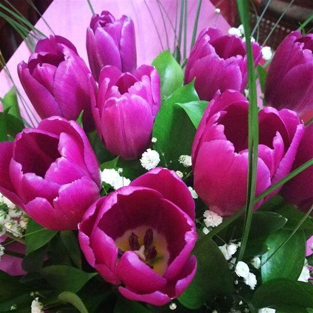 тюльпаны цвет Ливан путешествия букет русскиезаграницей беларусы ...