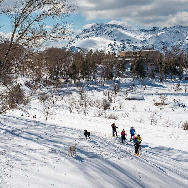 Venture Onward lebanon laklouk snow dogs neige white clouds ... (El Laklouk, Mont-Liban, Lebanon)