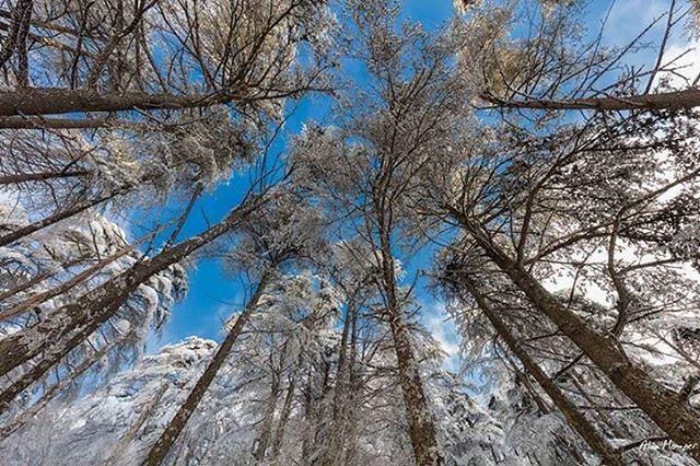good morning photography authentic shouf reserve nature trees ... (Ain Zhalta - Bmohray Cedars)