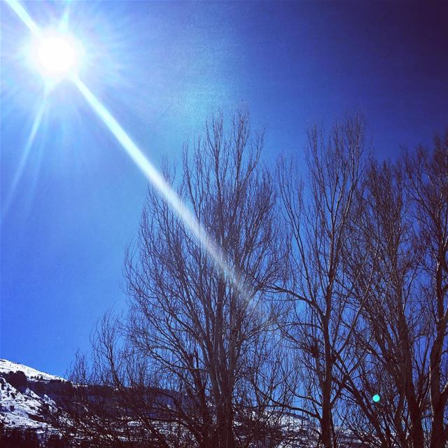 nature winter cold weather sunny day blue sky naked trees white ... (Faraya, Mont-Liban, Lebanon)